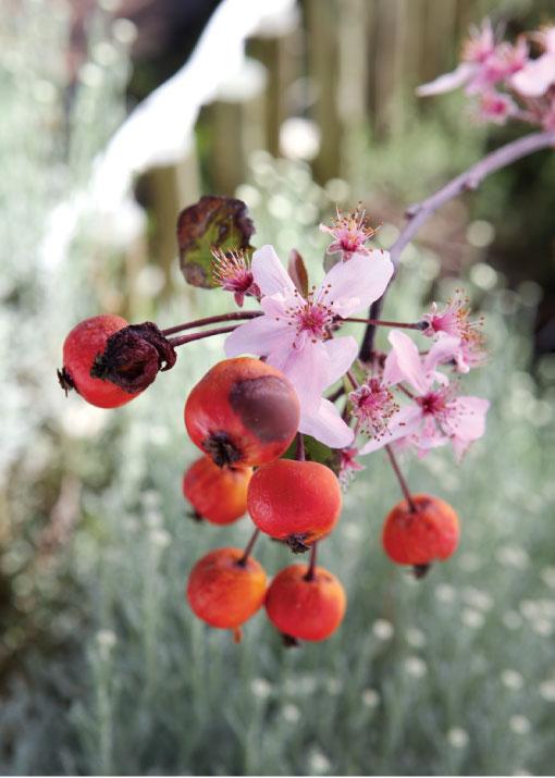 kleinood garden
