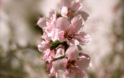 Alles rosé macht der Mai