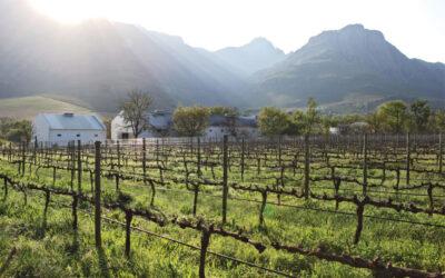 Kleinood Weine – eine kleine Kostbarkeit am Kap