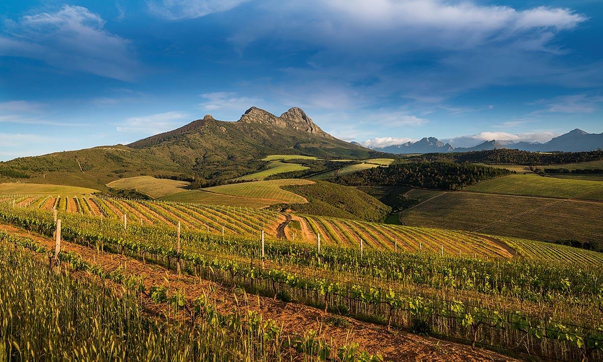 Savinis Blog Kanonkop Stellenbosch