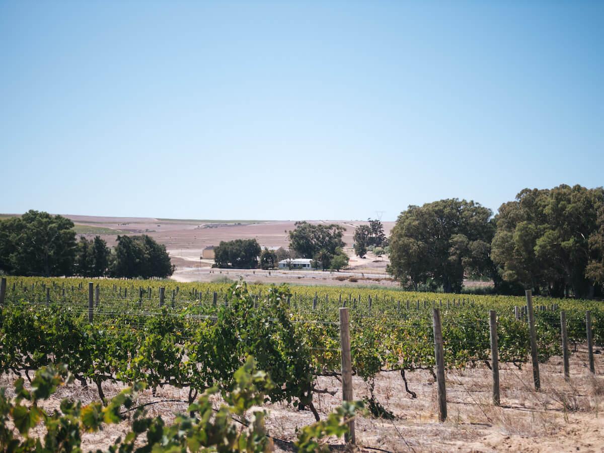 Titelbild-Spice Route Weingebiet Swartland